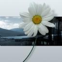 3D Çiçek