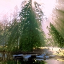 Ağaç Manzarası