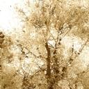 Ağaçın Yansıması