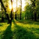 Ağaçların Arasında Güneş