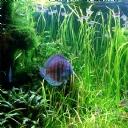 Balık 11