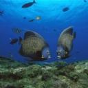 Balıklar 2