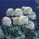 Balıklar 3