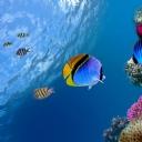 Balıklar 6