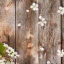Beyaz Çiçek 7