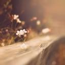 Çiçekler  11