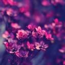 Çiçekler 8