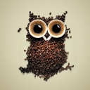 Coffe Bean Owl