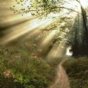 Dar ve Çiçekli Yol