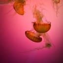 Deniz Canlıları 2