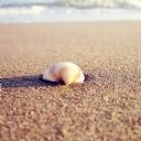 Deniz kabuğu 5