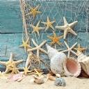 Deniz Kabuğu ve Deniz Yıldızı