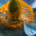Doğa Sarı Çiçek 1