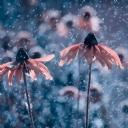 Doğa Sarı Çiçek