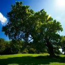 Eğimli Ağaç