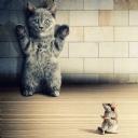 Eller Yukarı Kedi