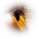 Göz 15