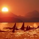 Gün batımı ve Balinalar