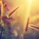Güneş ve Başak