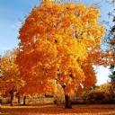 Güzel Ağaç