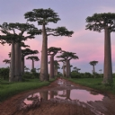 Güzel Ağaç Manzarası