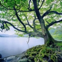 Güzel Ağaç ve Göl