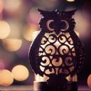 Işıklı Baykuş