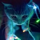 Işıklı Kedi
