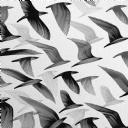 Karakalem Kuşlar