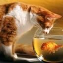 Kedi ve Balık 1