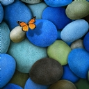 Kelebekler    13