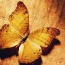 Kelebekler 6