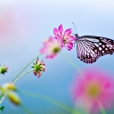 Kelebekler 7