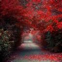 Kırmızı Ağaçlar