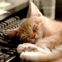 Klavyede Uyuyan Kedi