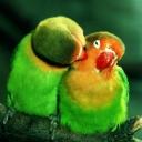 Kuşlar 4