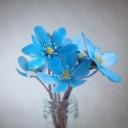 Mavi Çiçek 3