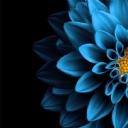 Mavi Çiçek 4