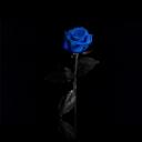 Mavi Gül 1