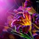 Mor Çiçek 5