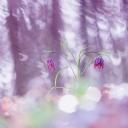 Mor Çiçekler 2