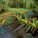 Orman Manzarası 2