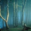Orman Manzarası