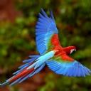 Papağan 1