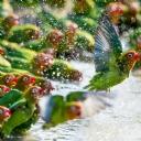 Papağanlar 1