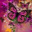 Pembe kelebek