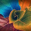 Renkli Yapraklar 1