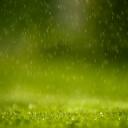 Sağnak Yağmur