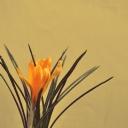Sarı Çiçek 2