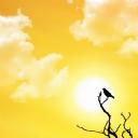 Sarı Gökyüzü